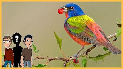 Episode 53: What if birds didn't exist? (feat. Alex Williams)