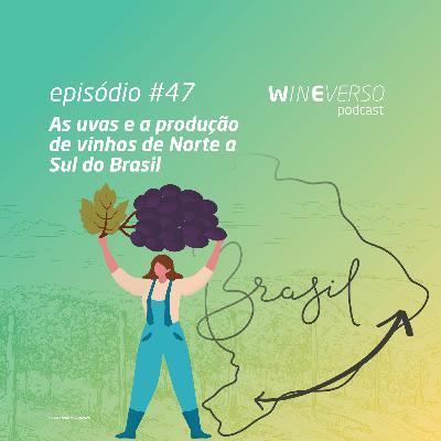 As uvas e a produção de vinhos de norte a sul do Brasil