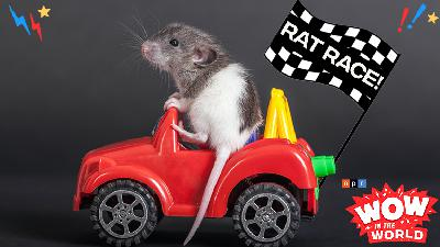 Tinkerclass (Week 2 Day 1): Rat Race!