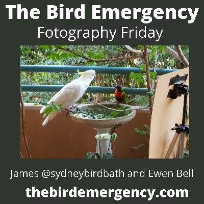 039 Fotography Friday with Ewen Bell and James from @SydneyBirdbaths