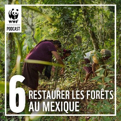 Restaurer les forêts vivantes au Mexique