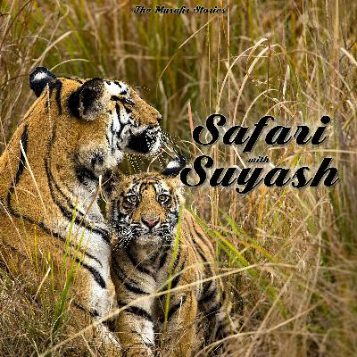 74: TMS Specials : Safari with Suyash