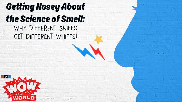 Getting Nosey About the Science of Smell: Why Different Sniffs Get Different Whiffs!