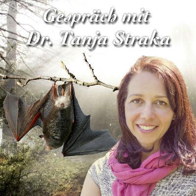 Murmelnde Fledermäuse - Dr. Tanja Straka