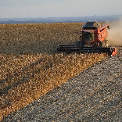 Fundo lança desafio de inovação para sustentabilidade da soja no cerrado
