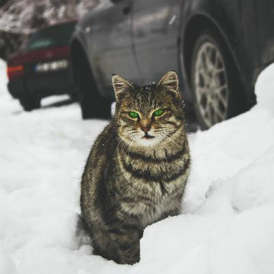 Sit Stay Listen | Karen Little | Alley Cat Advocates | Winter for Community Cats | February 14, 2021