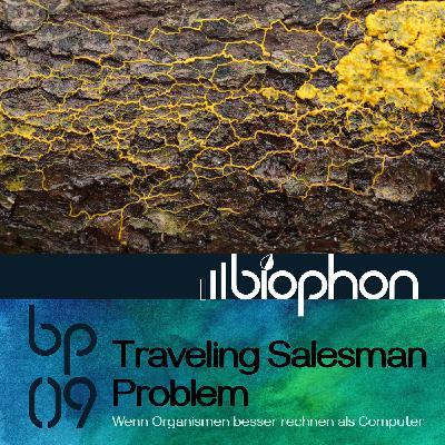 bp09: Traveling Salesman Problem - Wenn Organismen besser rechnen als Computer