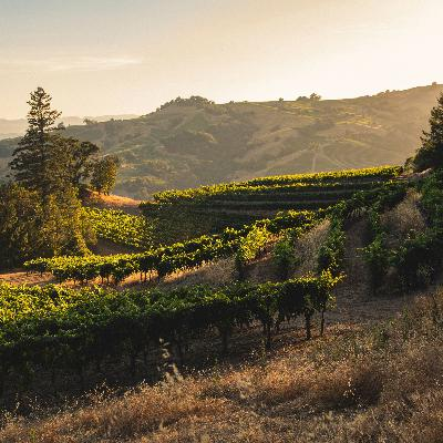 Stonestreet Estate Vineyards Dives Into the Winemaking Process of Mountain Grown Sauvignon Blanc