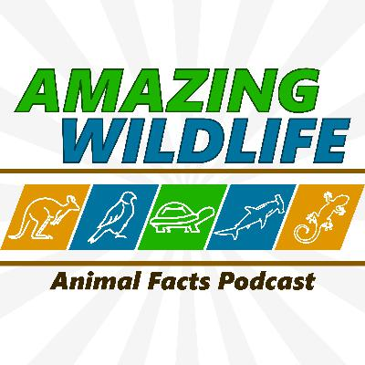 Aldabra Tortoise | Andean Bear | Zebras