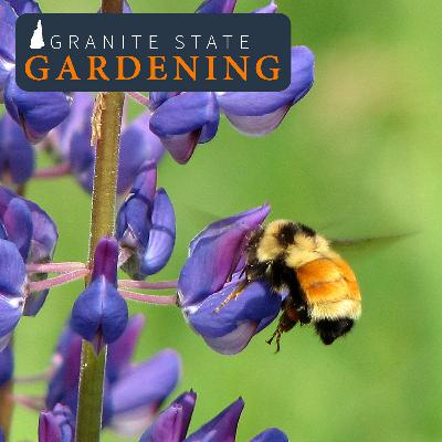 Celebrating Pollinator Week: Supporting Bees in your Yard and Garden