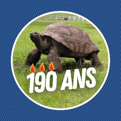 Jonathan, le plus vieil animal terrestre connu