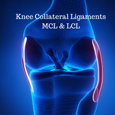 Knee Collateral Ligaments (medial collateral/MCL; lateral collateral/LCL)