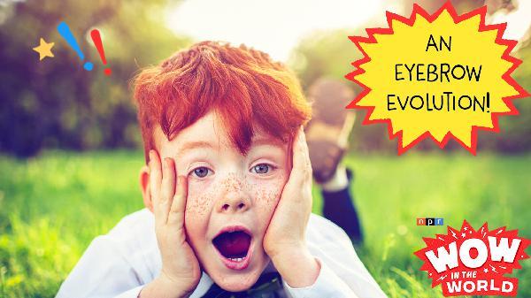 An Eyebrow Evolution!