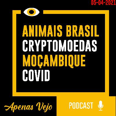 Apenas Vejo-Animais Brasil, Cryptomoedas, Mocambique e COVID