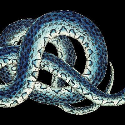 Joel Michalec Show 137: Snakes in the Backyard