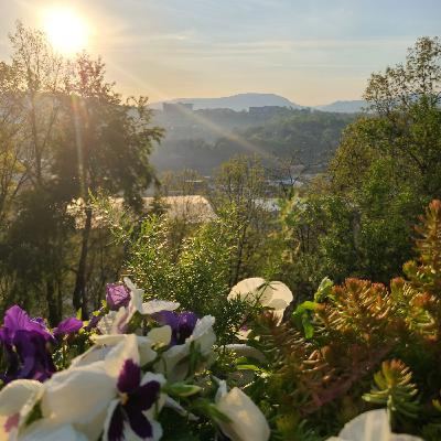 Relaxing Covid Restrictions in Asheville NC