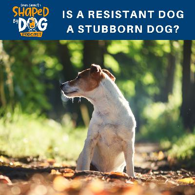 Is a Resistant Dog a Stubborn Dog?