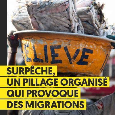 Surpêche, un pillage organisé qui provoque des migrations | Thibault Josse