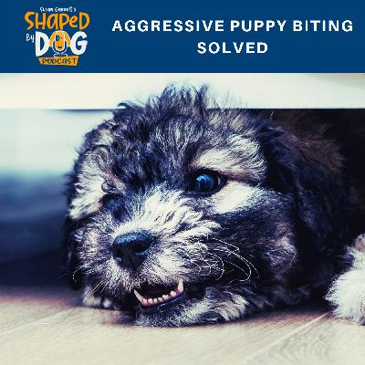 Aggressive Puppy Biting Solved