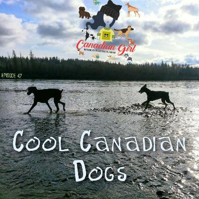 Cool Canadian Dogs