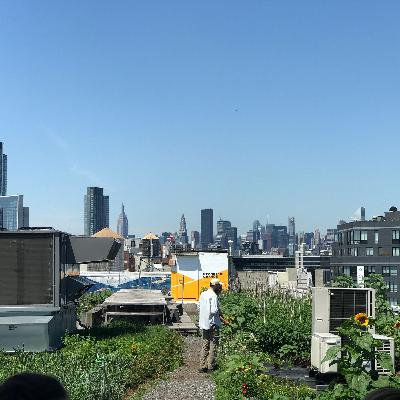 ニューヨークの屋上緑化・Rooftops of New York: Green Roofs in NYC