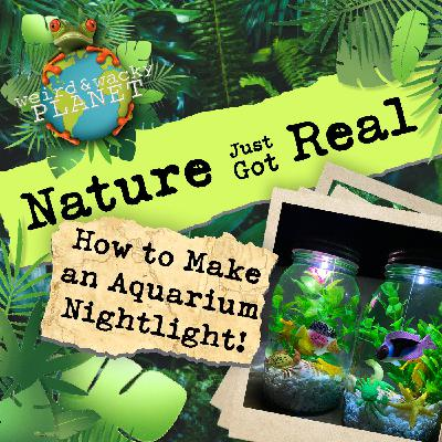 Ep #12 - How to Make an Aquarium Nightlight
