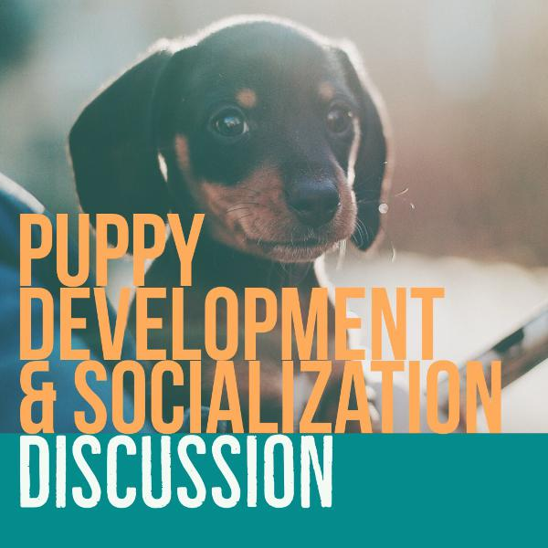 Puppy Development & Socialization