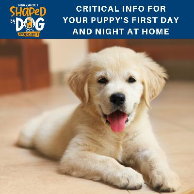 Critical Info for Your Puppy's First Day and Night at Home