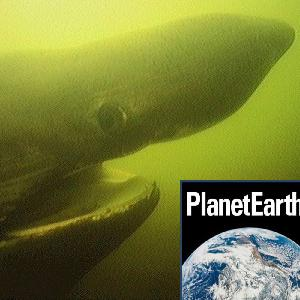 Climate tipping points, basking sharks, primates - Planet Earth Podcast - 13.01.08