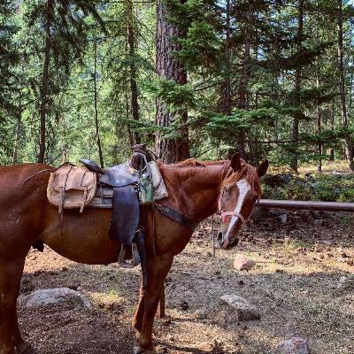 29 Horse Pack Trip into the Wilderness