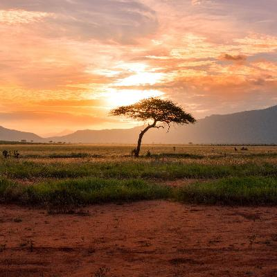 S3.10 Out of Africa: uncovering history and diversity in the human genome