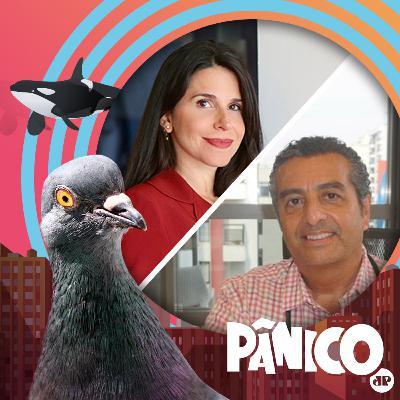 PÂNICO - AO VIVO - 16/11/20 - Fabi Saad d Dr. Zeballos