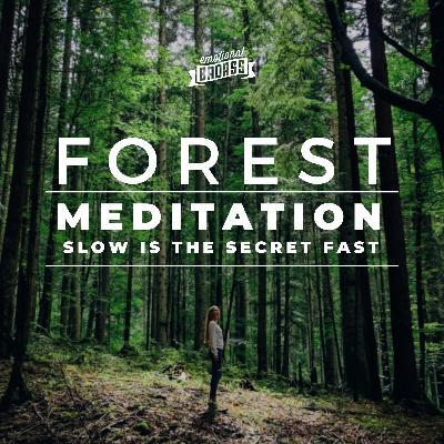 Forest Meditation - Slow is the Secret Fast