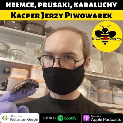 Hełmce, prusaki, karaluchy - Kacper Jerzy Piwowarek 2/2