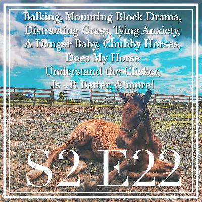 22 || Balking, Mounting Block Drama, Distracting Grass, Tying Anxiety, A Danger Baby, Chubby Horses, Does My Horse Understand the Clicker, Is +R Better, & More!