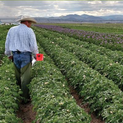 Rockey Farms: Adding Bio-Diversity to Grow a Good Crop