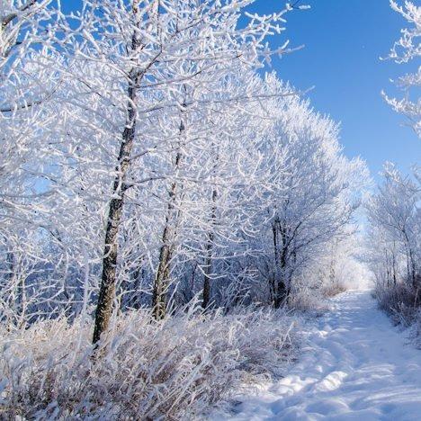 Episode 21: Outdoor Skills Lab - Winter Survival Skills