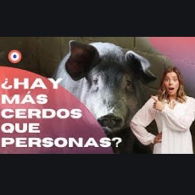 ¿HAY EN ESPAÑA MÁS CERDOS QUE PERSONAS?