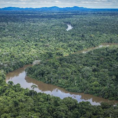 'Governos Lula e Dilma tiveram políticas ambientais eficientes'