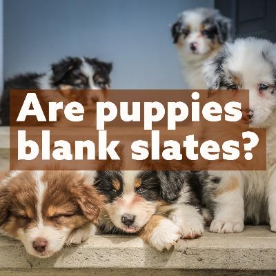 Are Puppies Blank Slates?