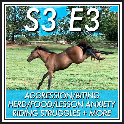 3 || Aggression/Biting, Herd/Food/Lesson Anxiety, Riding Struggles + More