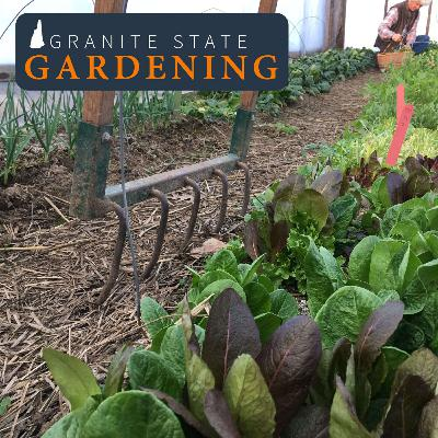 Extending the season and overwintering garden veggies, winter sowing, lovage, and putting the garden to bed