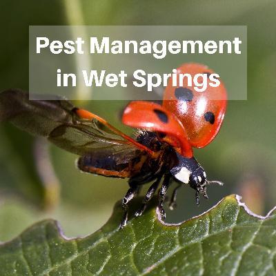 Pest Management in Wet Springs
