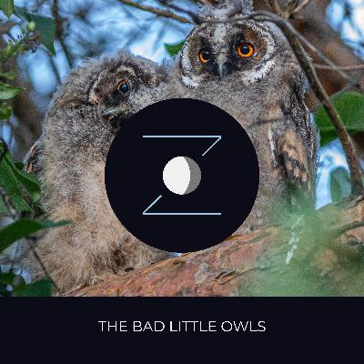 The Bad Little Owls