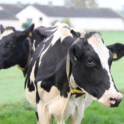 Episode 380: Helping Dairy Farms Plan for the Future
