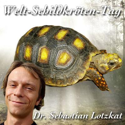 Schöne Schildkröten - Dr. Sebastian Lotzkat