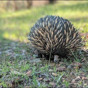 Ep. 8 - Citizen Science and Enigmatic Echidnas