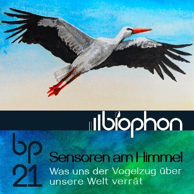 bp21: Sensoren am Himmel - Was uns der Vogelzug über die Welt verrät