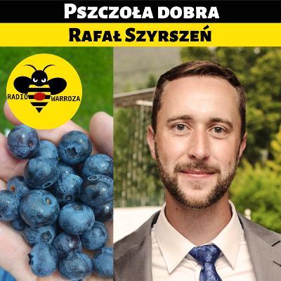 Pszczoła dobra - Rafał Szyrszeń