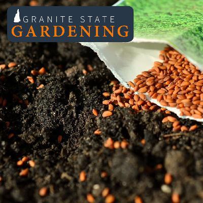 Planning Spring Vegetable Gardens, Soil Temperature, Nasturtiums & Fencing